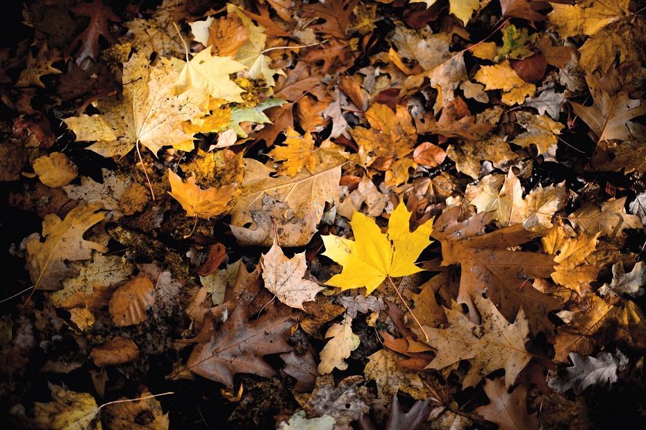 Kolorowa jesień, #autumnleaves
