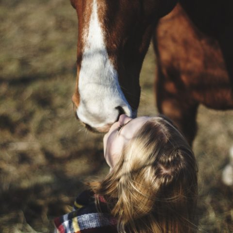 Bez konia jak bez duszy
